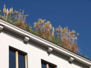 Eifeler Dachprofis - Dachbegrünung